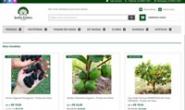 巴西最大的苗木门户:Jardim Exótico